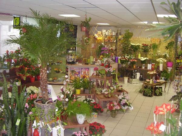 grand choix de fleurs,plantes,compositions, pour tous les budgets.